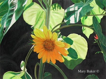 Sun Flower 2 © Mary Baker