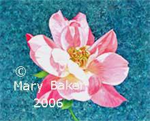 Pink_Rose-copyright.jpg