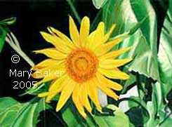Sunflower-1_copyright.jpg