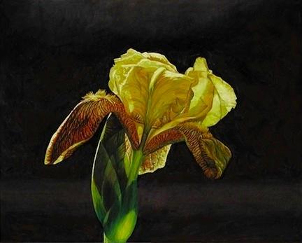 Yellow Iris © Mary Baker