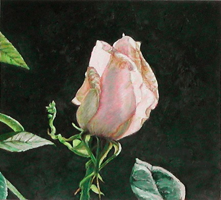 Rose, painting by Mary Baker