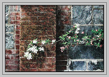 apple-blossoms_frame