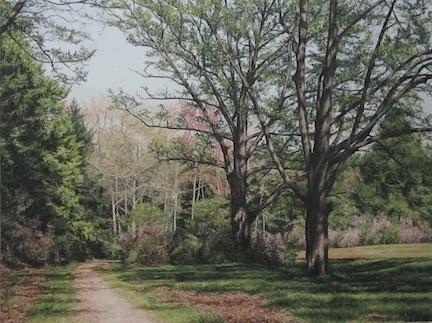 Pathway at Maudslay