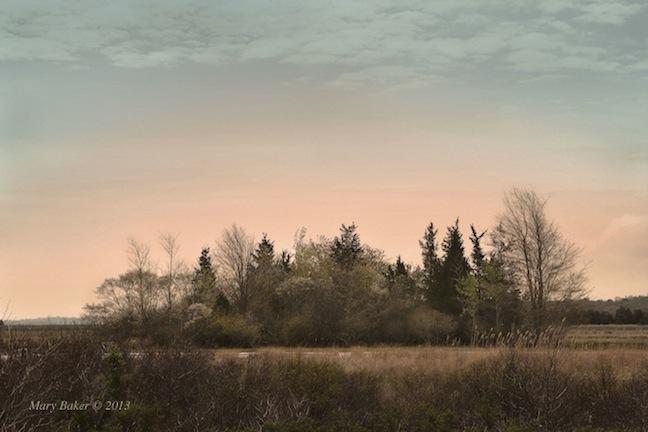 Spring, Plum Island Turnpike, Mary Baker © 2014