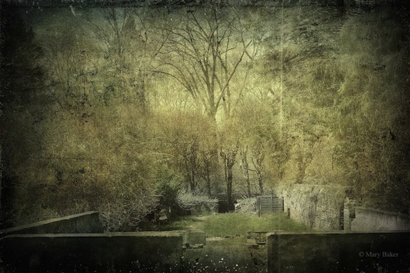 Garden at Maudslay, digital image © Mary Baker