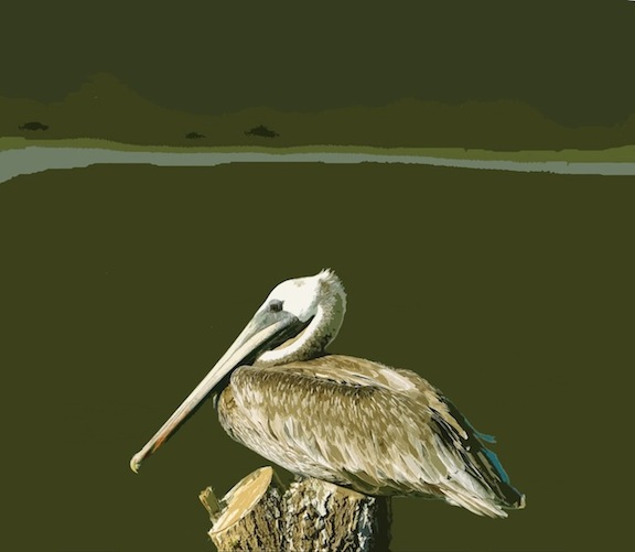 Pelican 2, Digital Image