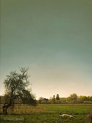 Pig and Apple Tree, digital image © Mary Baker
