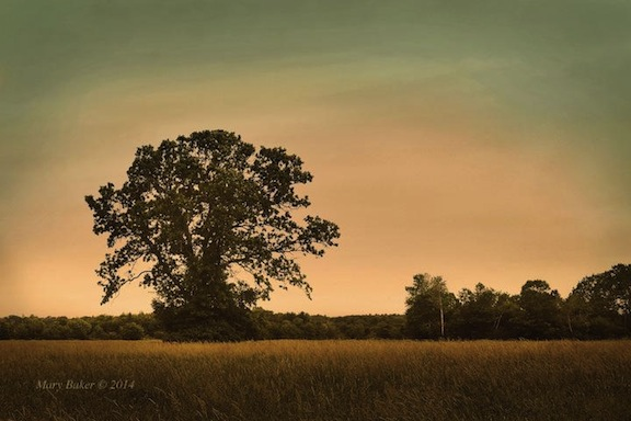 Tree and Pasture 2 © Mary Baker, digital image