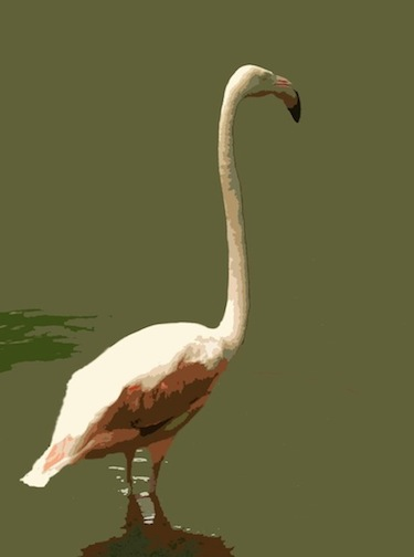 Flamingo 1, Digital Image