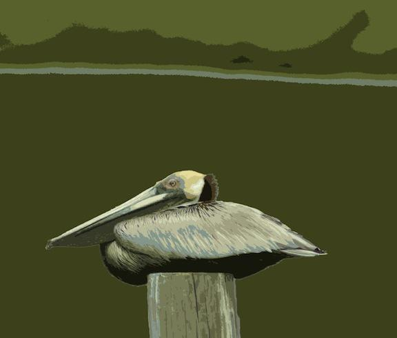 Pelican 1, digital image © Mary Baker
