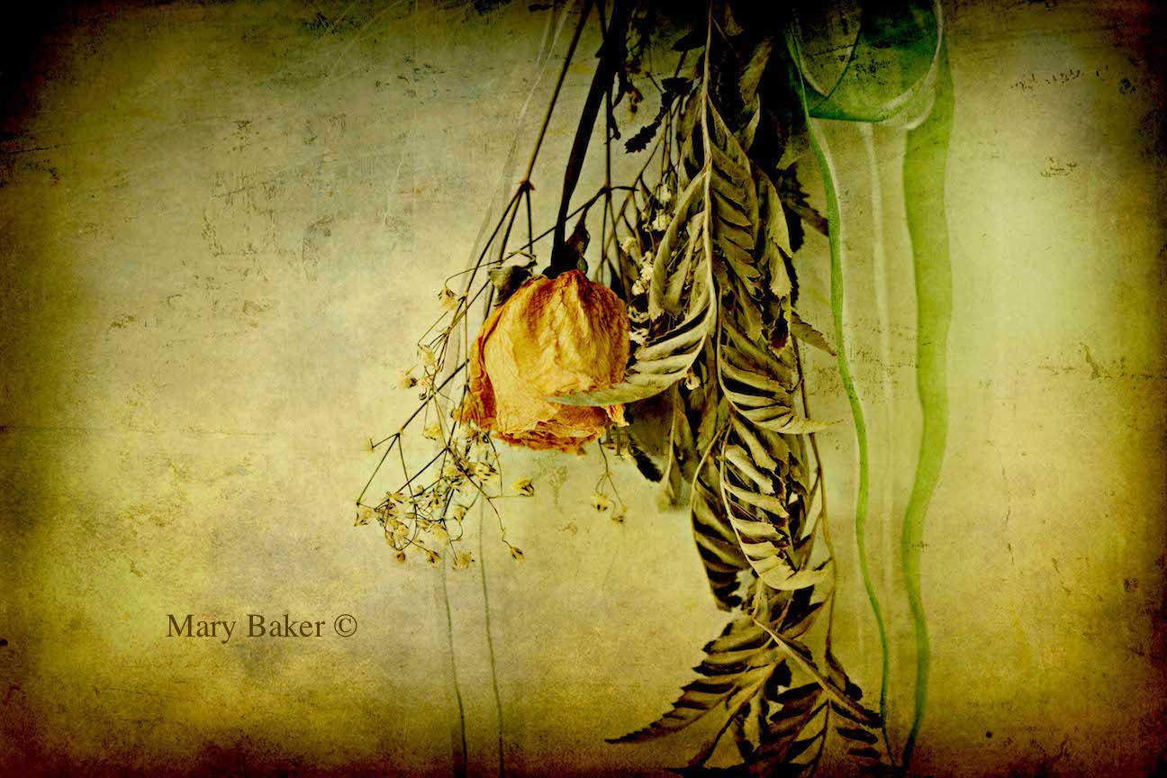 Rose, © Mary Baker, digital image