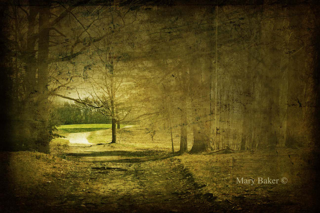 Path © Mary Baker - Digital Image