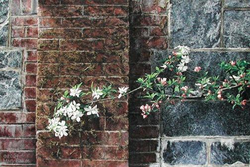 'Apple Blossoms and Wall' ©
