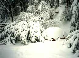 blizzard_trees.jpg