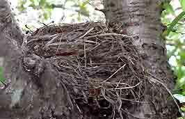 nest_1.jpg