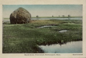 Newburyport postcard, Plum Island Haystack, press image to enlarge.