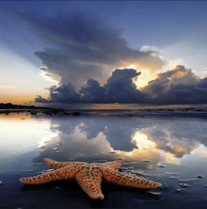 Starfish, digital photo by 4eyesphoto (used with permission)