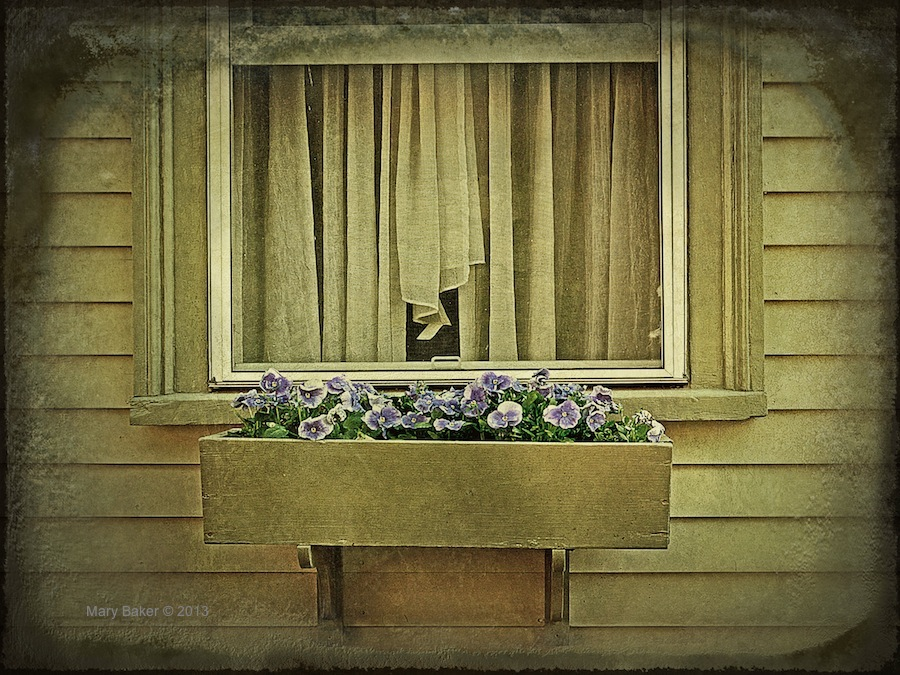 Window with pansies, digital image © Mary Baker