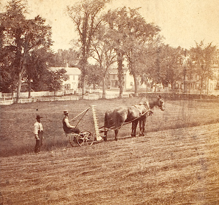 Two men harvesting Mount Rural in 1880, Courtesy of Historic New England